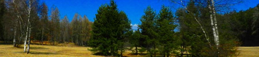 F360 - Foresta a 360°